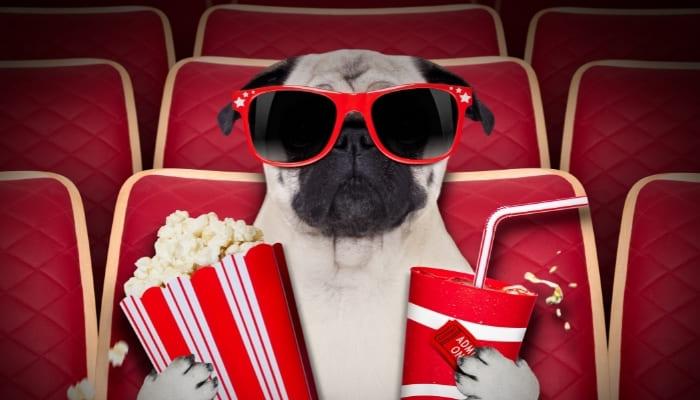 映画を見る犬
