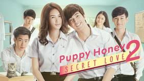 Puppy Honey2